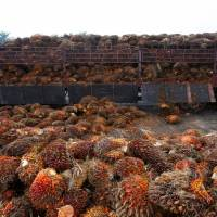 Crude palm oil futures up 0.2% to Rs 742.9/10 kg