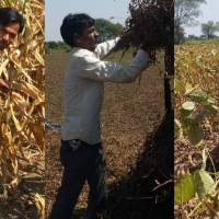 COVID-19 makes money more scarce for MP#39;s small farmers
