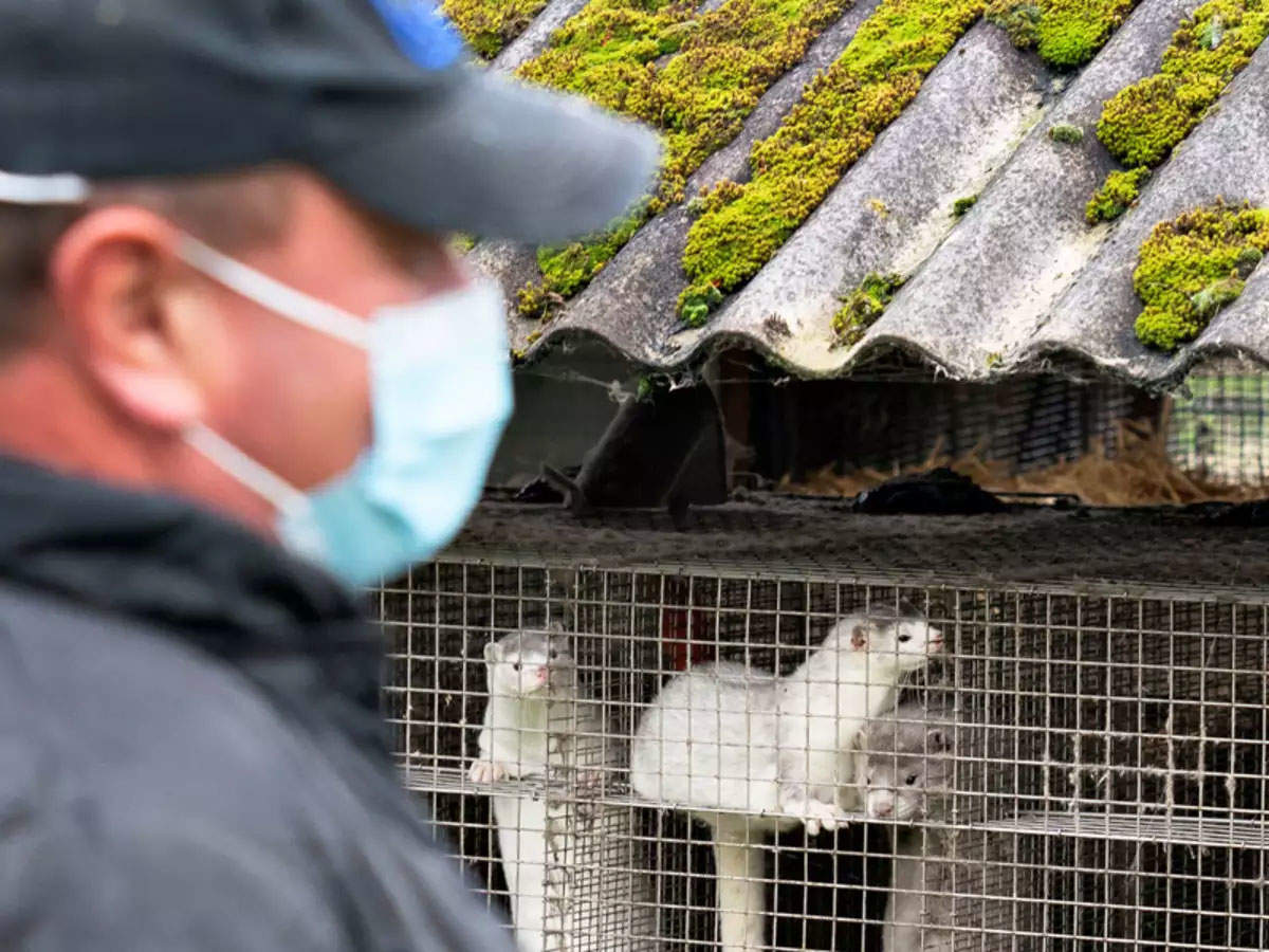 View: Covid-19 puts a question mark on the future of world's mink farms