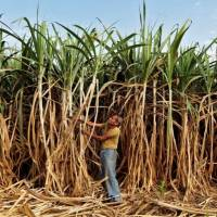 Government#39;s ethanol push prompts sugar mills to raise production