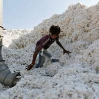 Cotton futures rise 1.32% to Rs 22,180 per bale, Motilal Oswal suggests buy on dips strategy