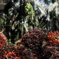 Crude palm oil touches fresh lifetime high on firm demand, strong global cues